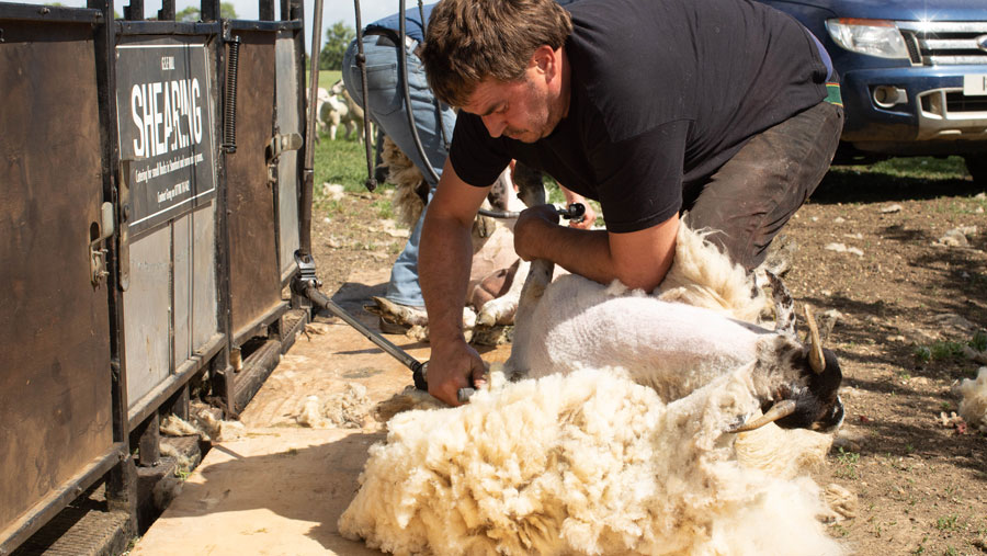 Latest British Wool auction sees prices up 35% since July