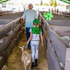 Junior livestock auction in Placer County goes big to help feed the hungry